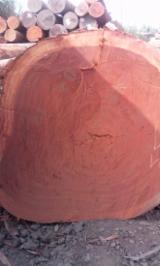 Tropical Wood  Logs For Sale USA - Padouk (Camwood, Barwood, Mbel, Corail) tropical logs