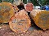 Tropical Wood  Logs For Sale USA - Kosipo veneer logs offer