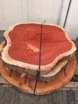Drewno Liściaste  Drewno Okrągłe – Tarcica Blokowa – Tarcica Nieobrzynana Na Sprzedaż - Tarcica Nieobrzynana, Sapelli