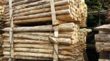 Hardwood Logs importers and buyers -  Robinia acacia poles wanted