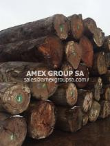 Tropical Wood  Logs For Sale - Pachyloba logs (Afzelia pachyloba)