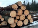Softwood  Logs - Natural white pine saw logs request