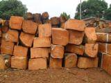 Tropical Wood  Logs -  Kosso wood - Rose wood - squared logs - Timber - Lumber - Boards