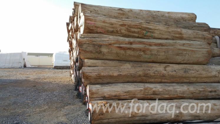 Original Teak Wood Furniture: Original Burma Teak Round Logs