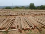 null - Eucalyptus poles from India