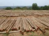 Cylindrical Trimmed Round Wood - Eucalyptus poles