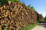 Firewood, Pellets And Residues - Casuarina firewood /pulpwood
