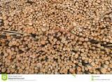 Firewood, Pellets And Residues - Eucalyptus firewood/pulpwood