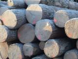 Softwood  Logs - Whitewood Logs - Origin : B.C. Canada