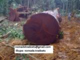 Tropsko Drvo  Trupci - Za Rezanje, Azobé (Bongossi, Ekki)