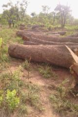 Tropical Wood  Logs For Sale - Good quality Kosso wood for sale