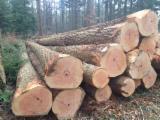 Softwood Logs for sale. Wholesale Softwood Logs exporters - Douglas Fir (Pseudotsuga), 30  et + cm, Plot/Charpente, Saw Logs, France