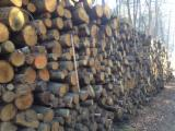 Firewood, Pellets And Residues Air Dried 18 Months - Chestnut firewood for sale from France