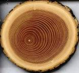 Unedged Hardwood Timber - Oak (American Red - Origin: America) Loose Italy