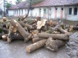 Hardwood  Logs Demands - White Ash Stump or Logs or planks or templates for hurleys