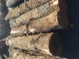 Tvrdo Drvo  Trupci - Za Rezanje, Orah (američki)
