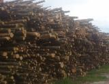 Hardwood  Logs - Firewood, Beech (Europe)