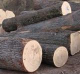 Hardwood  Logs Beech Europe For Sale -  Timber logs and lumbers as well as pellet