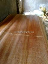 Rotary Cut Veneer For Sale - KERUING VENEER FACE FOR PLYWOOD