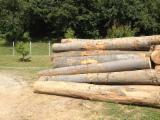 Hardwood  Logs Demands - Looking for beech logs