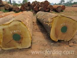 Quality-Iroko-logs-and-sawn