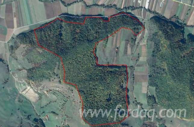 Woodland-from-Romania-80