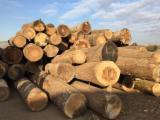 Hardwood  Logs - Beech saw logs quality A request