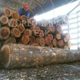 Tropical Wood  Logs For Sale - Teak - Now available