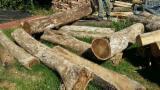 Kanada Vorräte - Schnittholzstämme