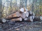 Hardwood  Logs - Veneer Logs, Oak (European)
