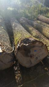 Hardwood  Logs - Sawn european Oak A grade