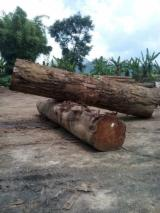 null - Schnittholzstämme, Balau, Red, Meranti, Dark Red