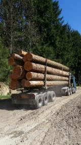 Douglas Fir (Pseudotsuga), 50 cm, charpente, Peeling Logs, France