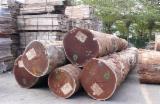 Tropical Wood  Logs For Sale USA - Bilinga Logs and Lumber