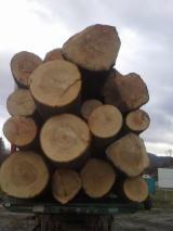 Hardwood  Logs - Veneer Logs, Ash (White)(Europe)