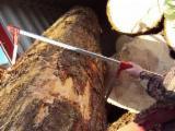 Softwood  Logs Demands - Saw Logs, Fir (Abies alba, pectinata)