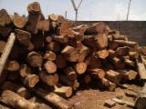 Tropical Wood  Logs - Teak logs from Togo