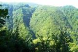 Paduri si Terenuri Forestiere De Vanzare - Cumpara Direct De La Proprietari - Vand 152 Ha padure comasat jud. Buzau - zona Tisau
