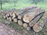 Hardwood Logs For Sale - Register And Contact Companies - Acacia roundwood logs