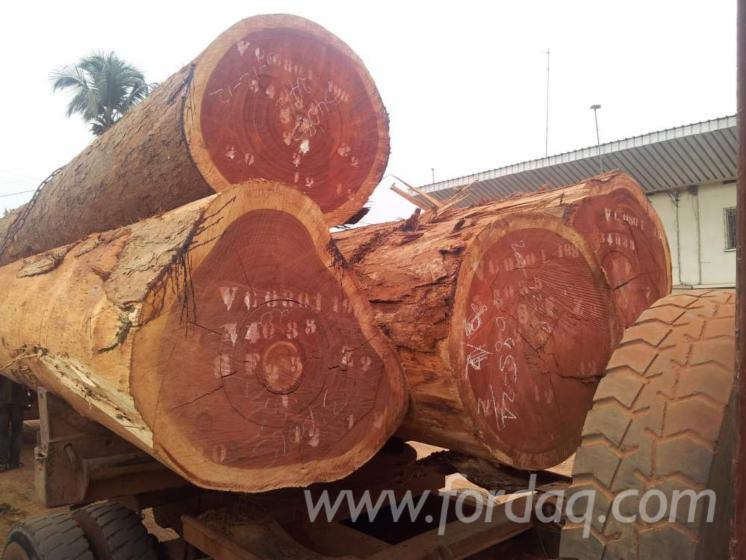 Quality-Padouk-round-logs-and-sawn