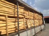 Hardwood  Logs -  Conical shaped round wood, Acacia