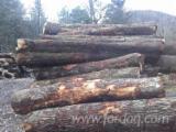 Tvrdo Drvo  Trupci - trupci hrasta