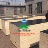 5-6 times usage 15-25mm one time hot pressed black finger jointed film faced plywood