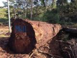 Want to Export Ancient Swamp Kauri