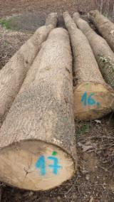 White ash logs available