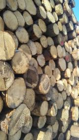 FSC Certified Softwood Logs - White Fir (Abies concolor), 17-49 cm, ABCD - Quality ( for the Austrian quality standard ), Saw Logs