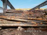Hardwood  Logs - 35+ cm Beech (Europe) Saw Logs from Germany, Bayern - Baden Wurttemberg