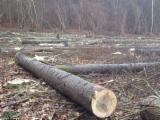Buy Or Sell Hardwood Peeling Logs PEFC FFC - Selling POPLAR Logs