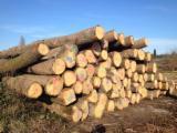 Hardwood  Logs - Selling White OAK Logs - BBC grade