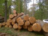 Hardwood  Logs - Selling White OAK logs - AB grade
